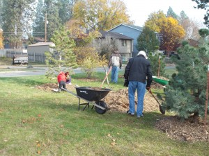 Nov 8th, Council members and Lincoln Heights Garden Club members mulch 20 new trees.