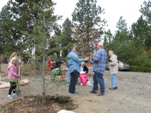 10-24-15 tree planting - adding bulbs